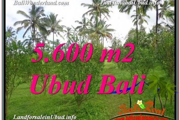 INVESTASI PROPERTI, TANAH MURAH DIJUAL di UBUD BALI TJUB609