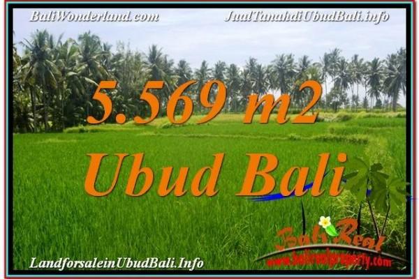 TANAH MURAH di UBUD BALI 5,569 m2 di Sentral / Ubud Center