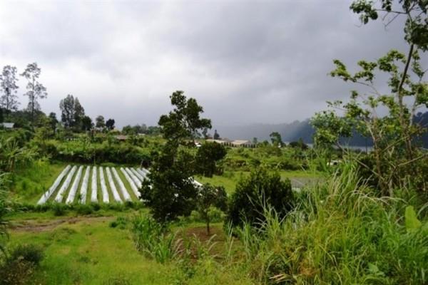 Dijual Tanah di Kawasan Bedugul, Bali – TJBE002