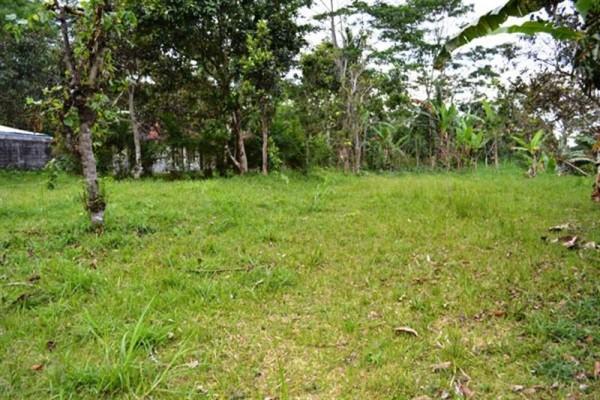 Dijual Tanah 49 Are di Luwus Bedugul, Bali – TJBE004