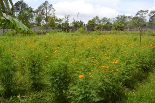 Tanah Dekat Joger Dijual Di Luwus Bedugul, Bali – TJBE008