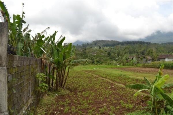 Tanah Ideal untuk Tempat Usaha Dijual di Bedugul, Bali – TJBE010