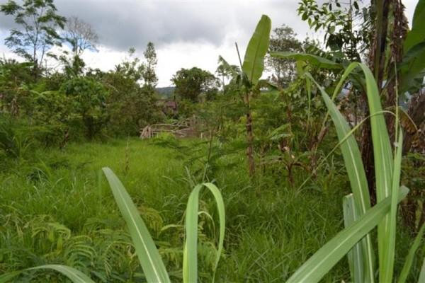 Tanah Dijual Dengan Suasana Pegunungan di Baturiti, Bali – TJBE012