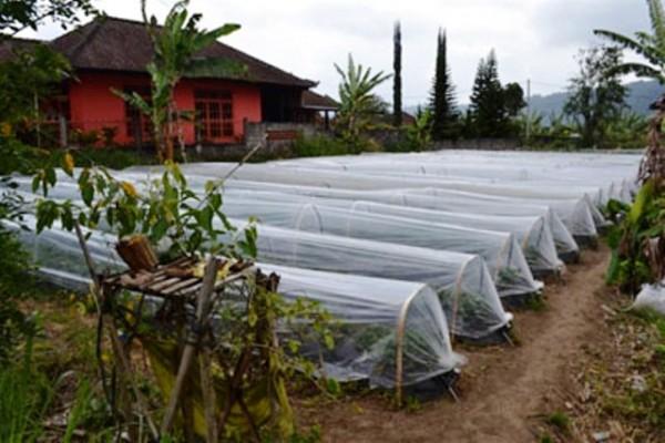 Tanah Dijual Lingkungan Nyaman di Bedugul, Bali – TJBE019