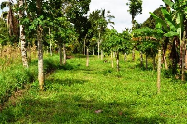 Tanah Murah Dijual di Baturiti, Bali – TJBE020