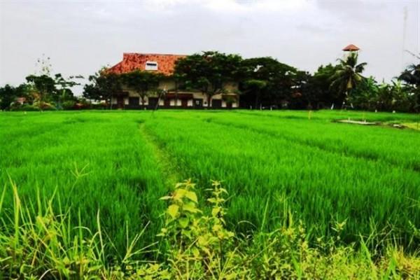 Tanah Dijual Di Canggu Bali, dekat Canggu Club – TJCG027