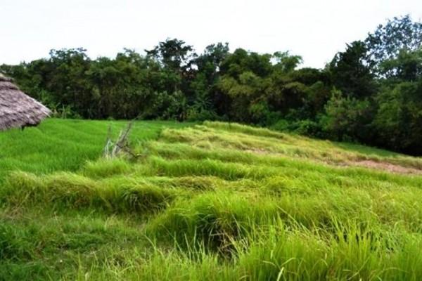 Dijual tanah View sawah dekat Echo Beach Canggu Bali – TJCG029