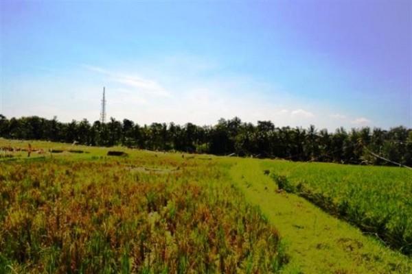 Dijual Tanah di Canggu Bali, View sungai 22,25 are – TJCG035