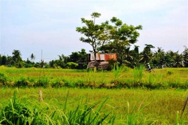 Tanah Dijual di Canggu Bali 84 are – TJCG038