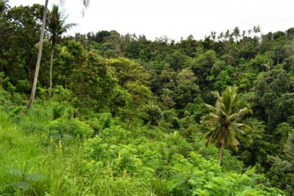 Dijual Tanah di Bukit Jati Gianyar, bali – TJGN005