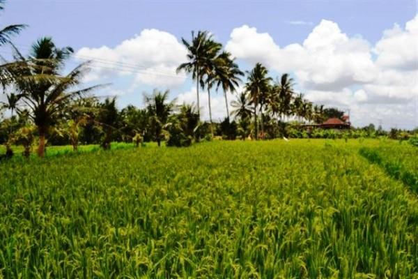 Tanah Dijual di Petulu Ubud, Bali – TJUB023