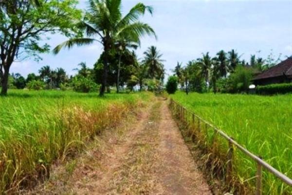 Tanah dijual Di Ubud view sawah dan tebing  – TJUB031
