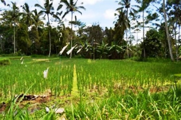 Dijual Tanah 1 Ha Di Tegalalang Ubud, Bali – TJUB035