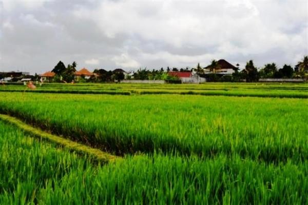 Tanah Dijual Di Ubud bali – TJUB036