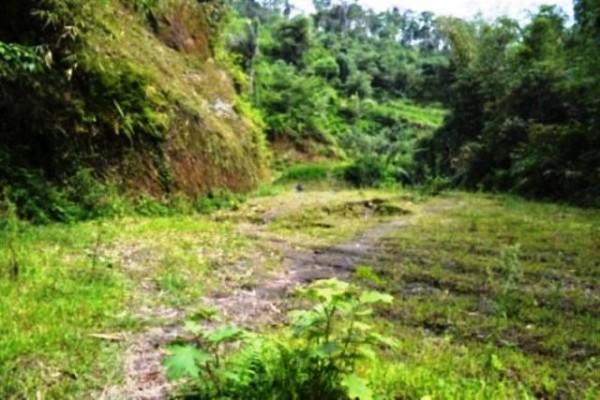 50 Are Tanah Dijual Di Ubud, Bali – TJUB037 ( SOLD! )