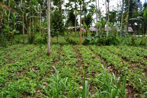 Dijual Murah Tanah Cantik Di Ubud, Bali – TJUB059