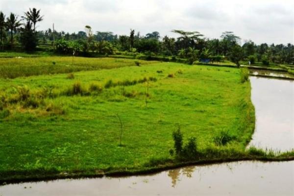 Dijual Tanah 30 Are Di Ubud Bali – TJUB062