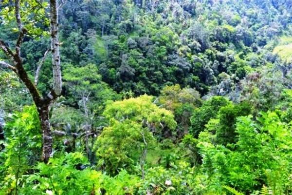 65 Are Tanah Dijual Di Payangan Ubud, Bali – TJUB065