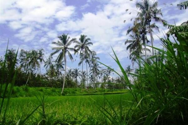 Tanah 180 Are Dijual di Payangan Ubud, Bali – TJUB071