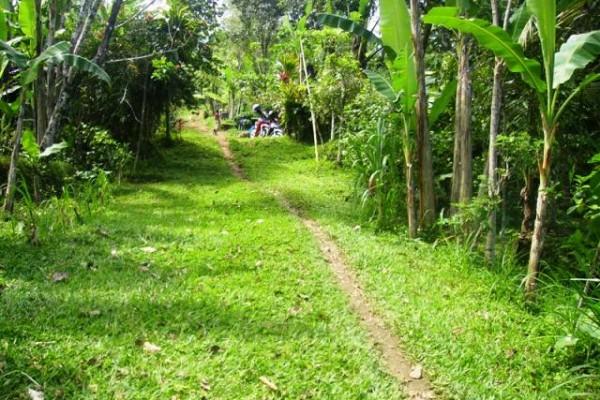 Tanah 1 Ha Dijual di Payangan Ubud, Bali – TJUB072