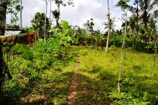 42 Are Tanah Dijual di Tegalalang Ubud, Bali – TJUB074