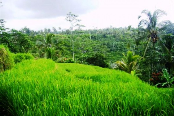 Dijual Tanah View Cantik Di Tegalalang Ubud, Bali – TJUB079