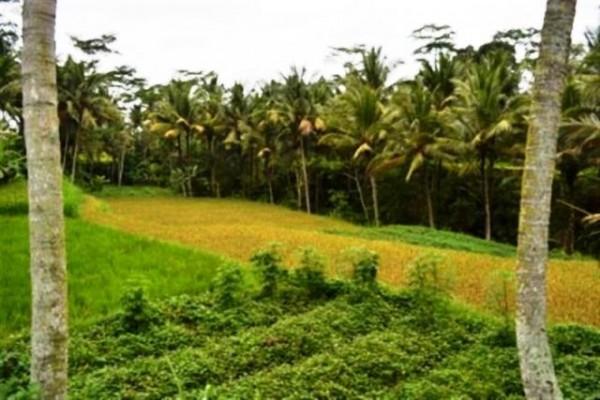 Tanah dijual di Ubud, 35 are dengan view sawah di cagahan @ 67 jt/ are (TJUB017B)