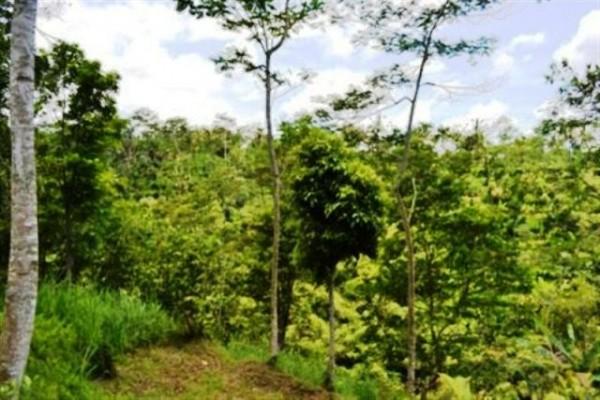 Tanah dijual di Ubud Tegalalang 1 Ha View Bagus @ 36 Jt / are (TJUB035B)