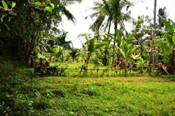 Tanah dijual di Ubud 35 are dengan view sawah, tebing dan sungai – TJUB055B
