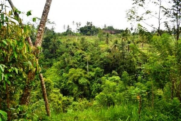 Tanah dijual di Ubud, 46 are di Pejeng – TJUB069B