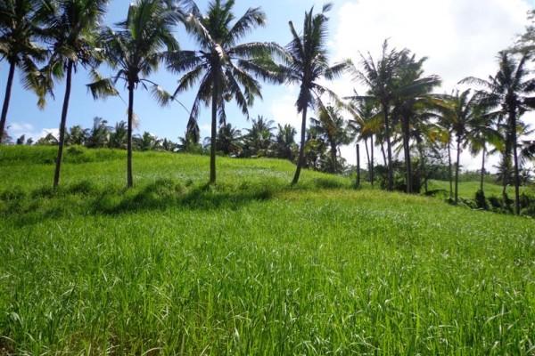 Tanah dijual di Ubud view sungai dan sawah ( TJUB113B )