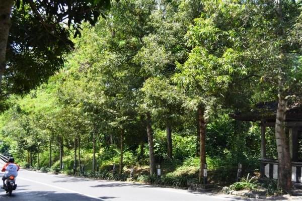 Jual tanah Pinggir jalan raya di Tulikup, Gianyar T1030