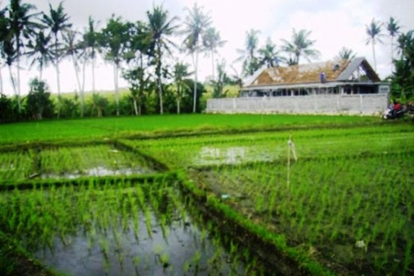 Jual tanah di canggu 7,25 are dekat Umaalas Kuta – TJCG017 ( sold! )