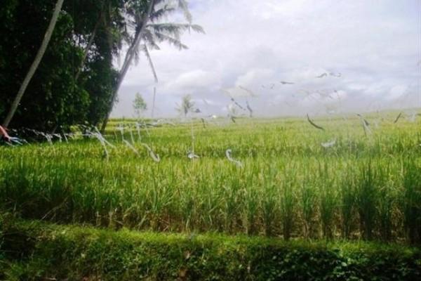Tanah dijual di Canggu Kuta Bali super murah – TJCG026