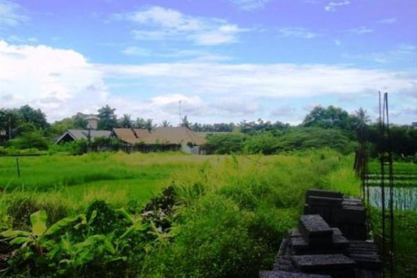 Tanah Dijual Di Canggu Bali, dekat Canggu Bali – TJCG027