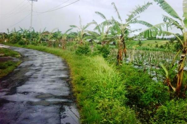 Tanah Dijual di Canggu pinggir jalan Dijual Cepat – TJCG043
