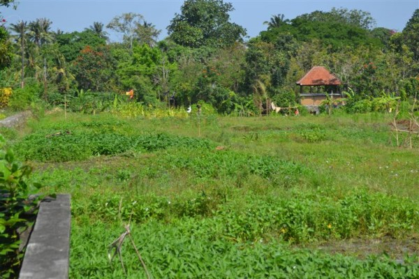 Dijual tanah lokasi Tiying Tutul Canggu, Kuta, Bali – TJCG069