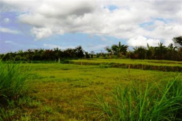 Dijual tanah di Saba, Gianyar (73 Are) – TJGN002