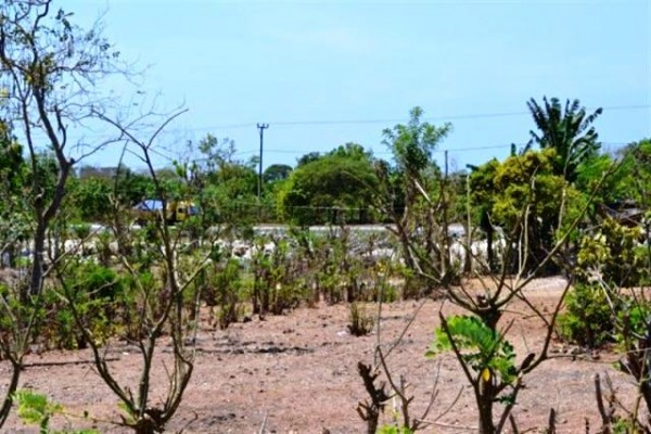 nice view land with cheap price ( 1,5 Ha ) @IDR 75 mill/100 m2 – TJJI004