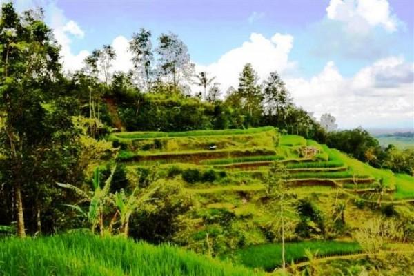 Dijual tanah view sungai sawah lokasi Jatiluwih Tabanan – TJTB008
