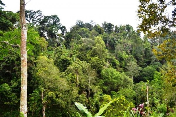 Tanah super murah di Ubud 1,43 Ha @ 17 jt/are – TJUB013
