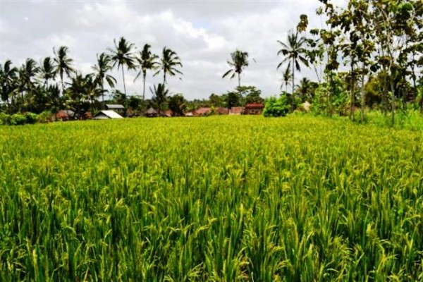 ubud land for sale 2300 m2 – TJUB023