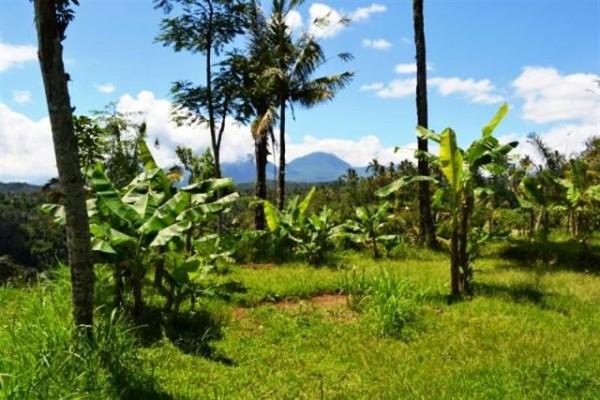 Jual tanah di UBud Payangan, view sawah dan gunung dekat Sungai Ayung – TJUB045