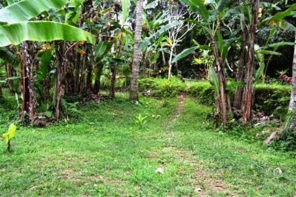Dijual Tanah di Sebali, Ubud. 35 are dengan view cantik @ 115 jt/are – TJUB055