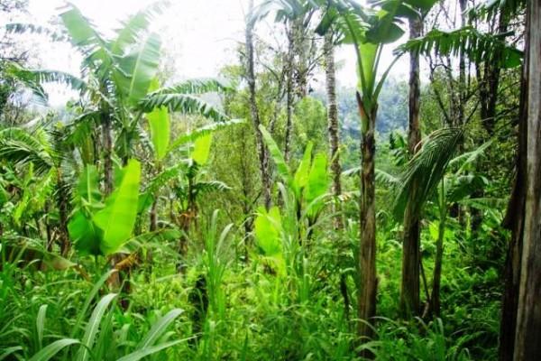 Tanah Dijual di Ubud, view excellent ke sawah, gunung dan tebing tepi sungai Petanu