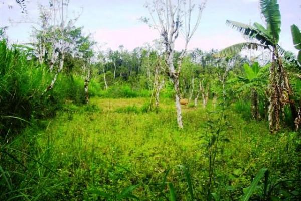 Tanah Dijual di Payangan Ubud, 2 Hektar view tebing tepi sungai – TJUB073