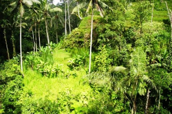 Land in Tegalalang Ubud great natural view with 2 waterfalls – TJUB081