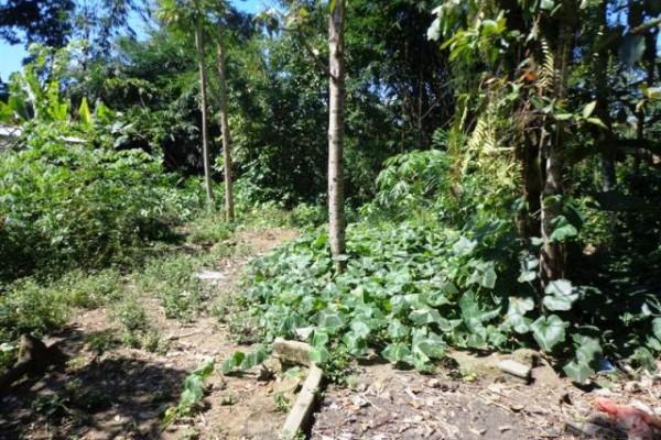 Jual tanah di Ubud 7,8 are dengan sungai kecil, sawah dan air terjun – TJUB090