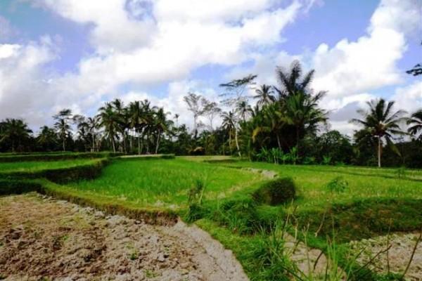 Jual tanah di Pakudui Tegalalang, Ubud – TJUB095