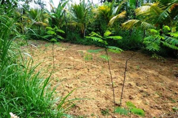 Jual tanah di Ubud view tebing cocok untuk villa – TJUB096